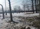 Droga Krzyżowa w obozie Auschwitz II-Birkenau_3